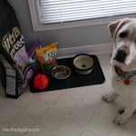 Dog-Sitting: What To Ask and What To Know – Topic #1: Food