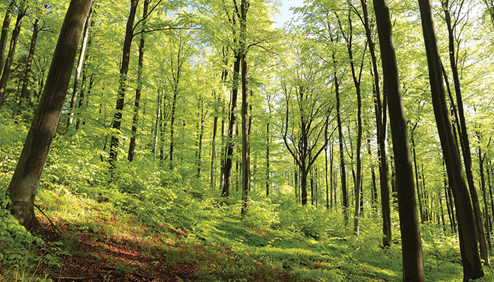 Animals in the deciduous forest. The Eastern Deciduous Forest Life In The Finger Lakes