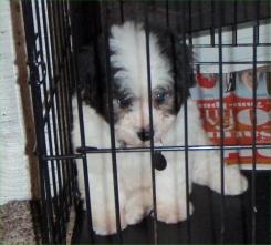 Benji sulking in his cage