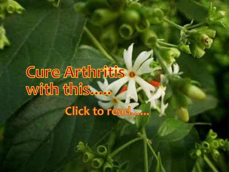harsingar leaves for sciatica