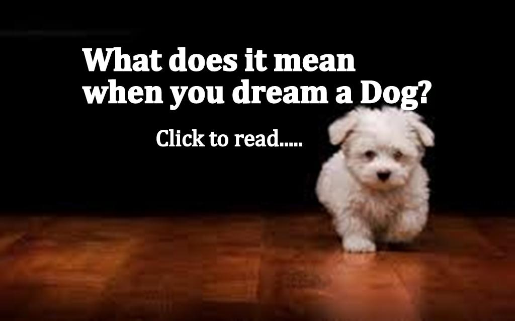 Dog dreams, Black, White, Brown, Bite, Attack & Lost Dream