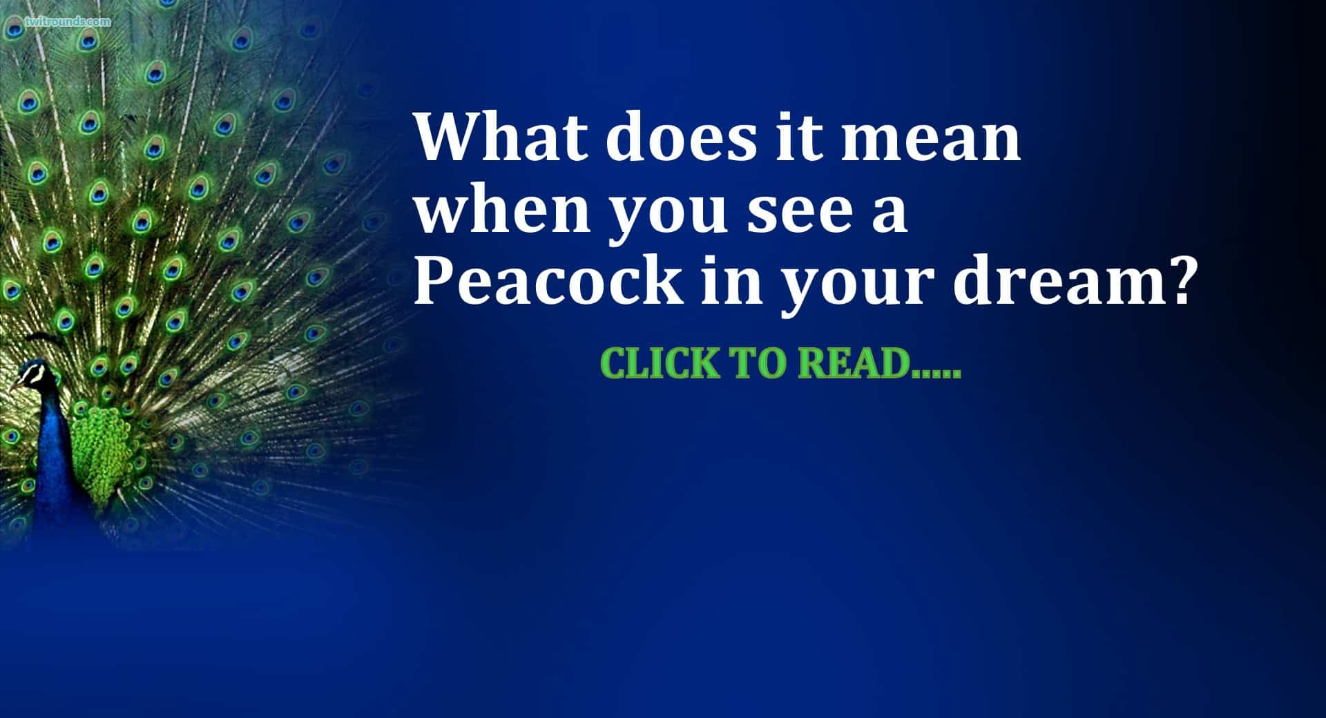 21+ Peacock Dream Meaning, couple, feather, dancing - Life In Vedas