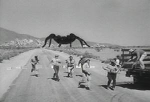 A Giant Tarantula