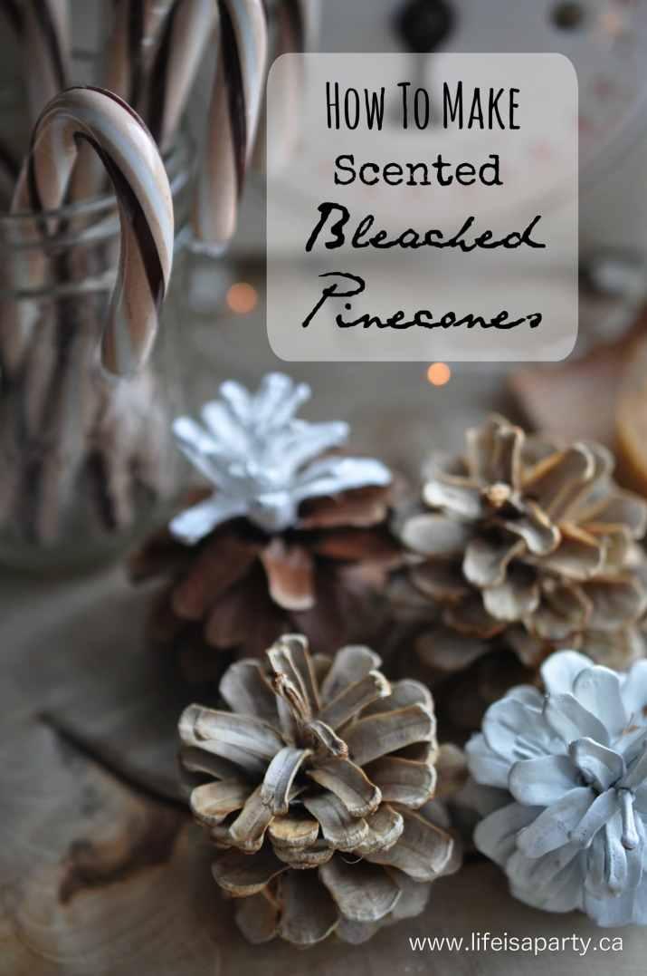 how-to-bleach-pinecones-1.1.jpg