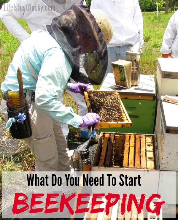 how to start beekeeping beginners