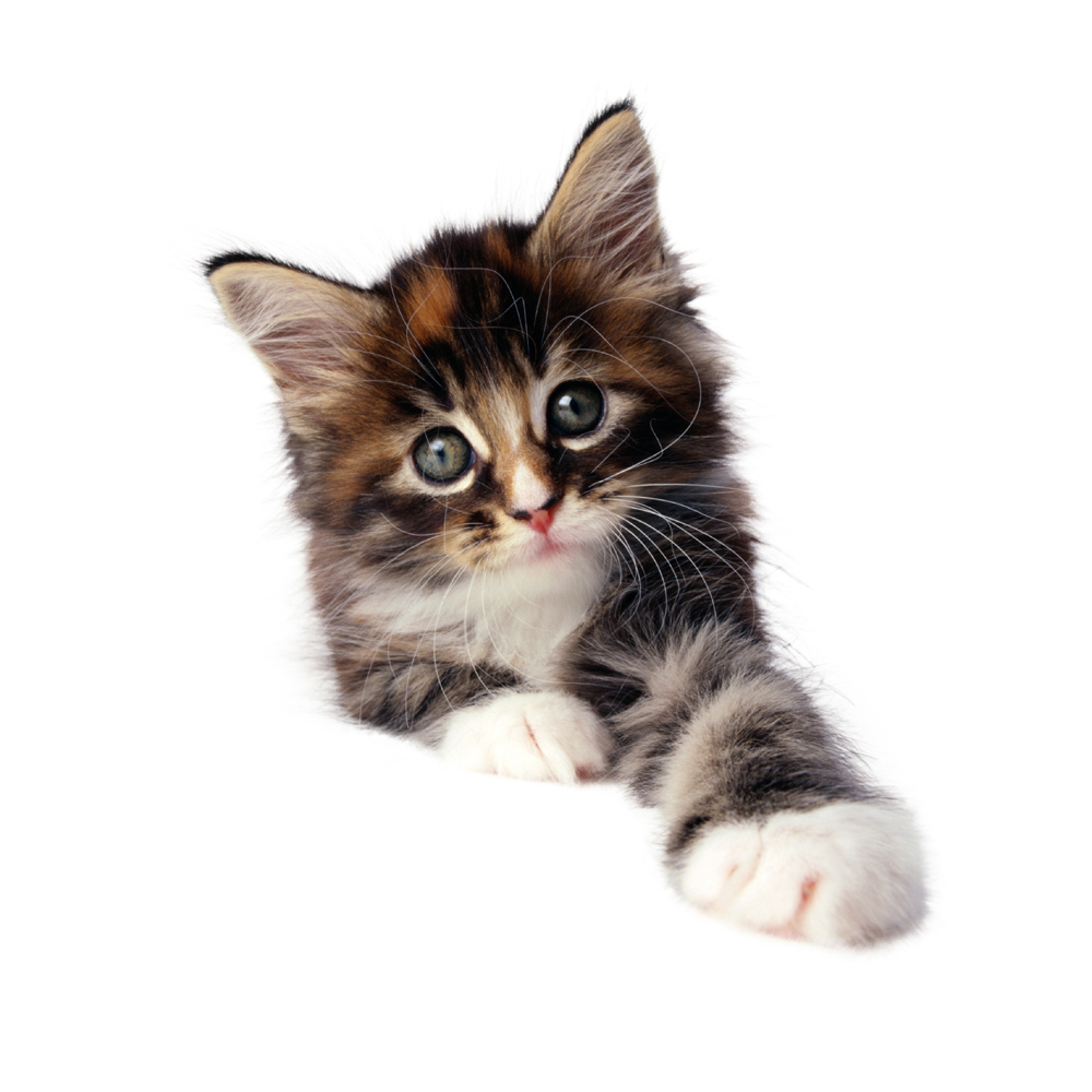 household_hazards_-_holiday_safety_tips_for_cat_owners-1