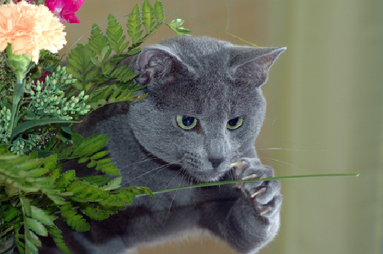 household_hazards_-_holiday_safety_tips_for_cat_owners-3