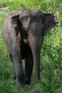 Sri Lanka (18)