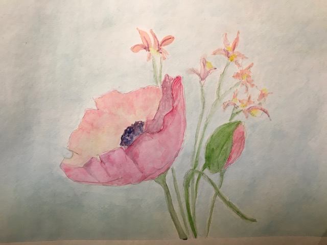 Pink Poppy (watercolor), Price negotiable