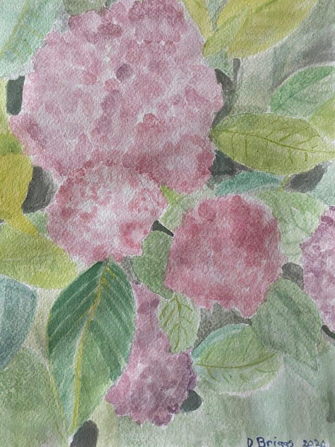 """""""Hydrangea"""" (watercolor) - NFS"""
