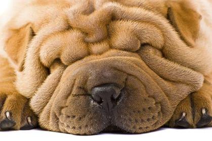 Image result for wrinkled faces