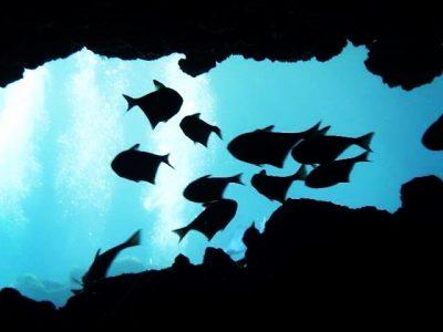 Höhlentauchen in Kap Greko