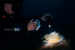 Underwater photography with a video torch