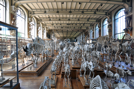 View of 'The Herd' at the Gallery of Paleontology and Comparative Anatomy in Paris, France
