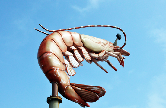 pole sign, plasic shrimp, interesting signs, sealife