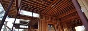 Cottonwood Modern