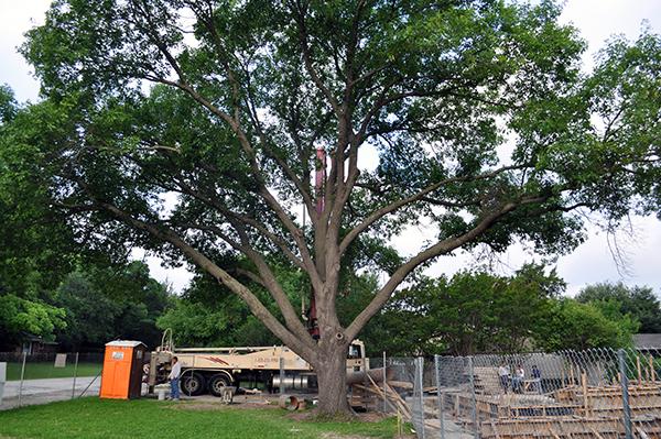 KHouse Modern pump truck large tree