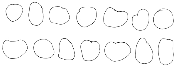 pumpkin sketches - the outline