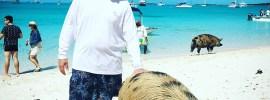 Exuma Swimming Pigs 03