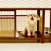 Barker Table – A Doghouse Worth Having Inside