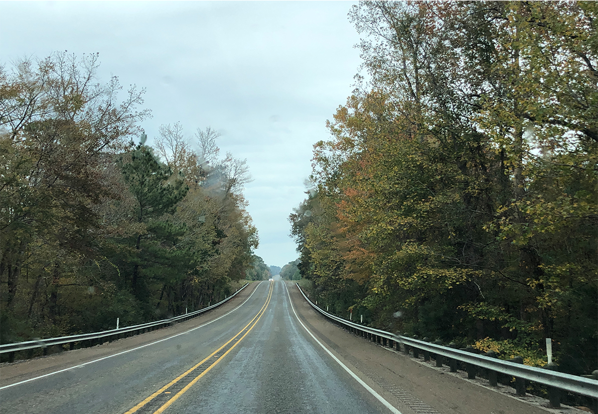 National Forests of my drive