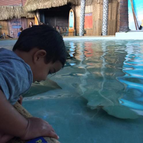Feeding the stingrays!