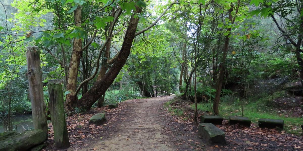 Flat Rock Gully Walks