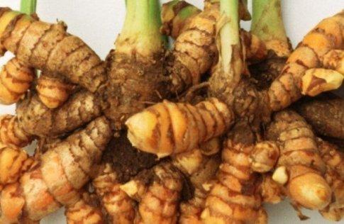 turmeric Root Benefits
