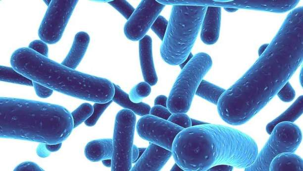Microbiome And Mental Health