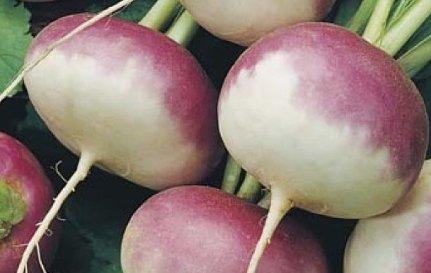 Health Benefits of Turnips
