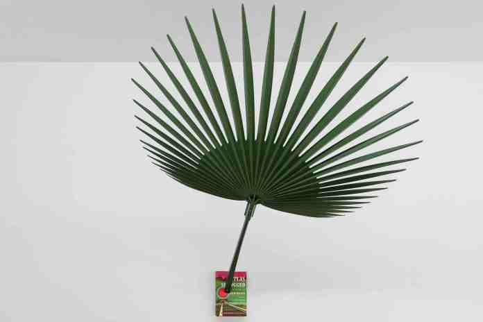 Past/ Present mostra lugano galleria Michela Negrini