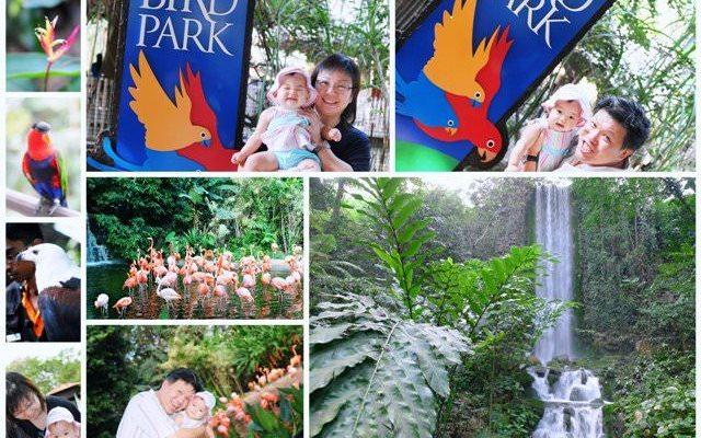 Call of the Wild – Part 1 Jurong Bird Park