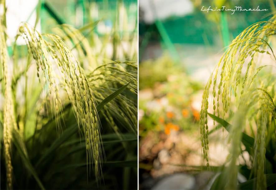Urban Farm_Barn Collage 8