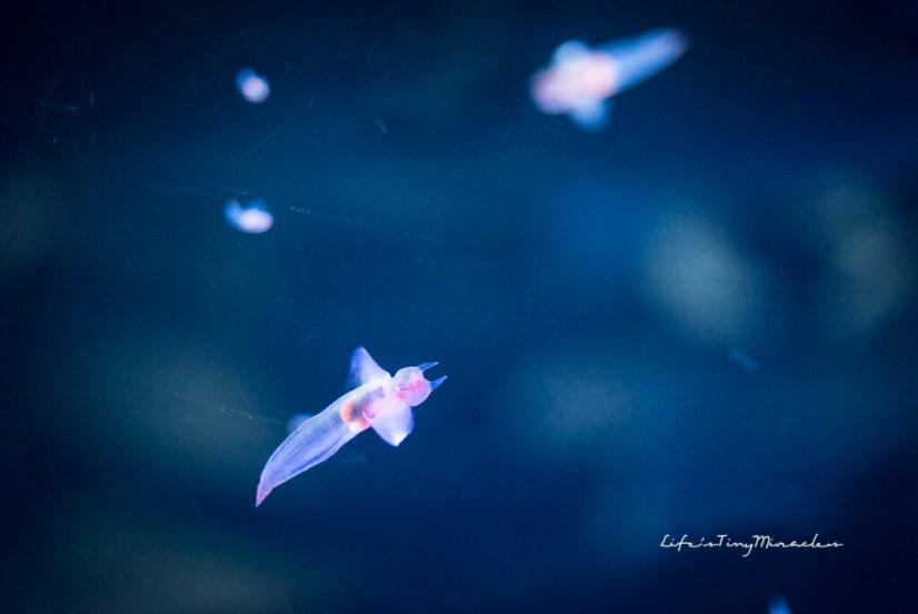 Osaka-Aquarium45
