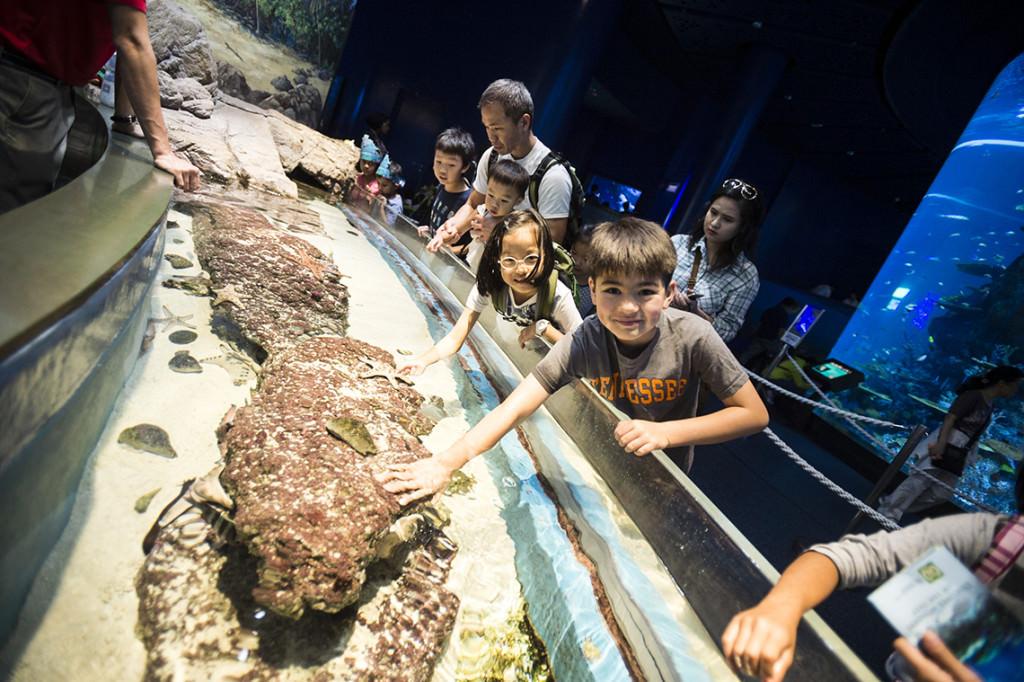 SEA Aquarium033