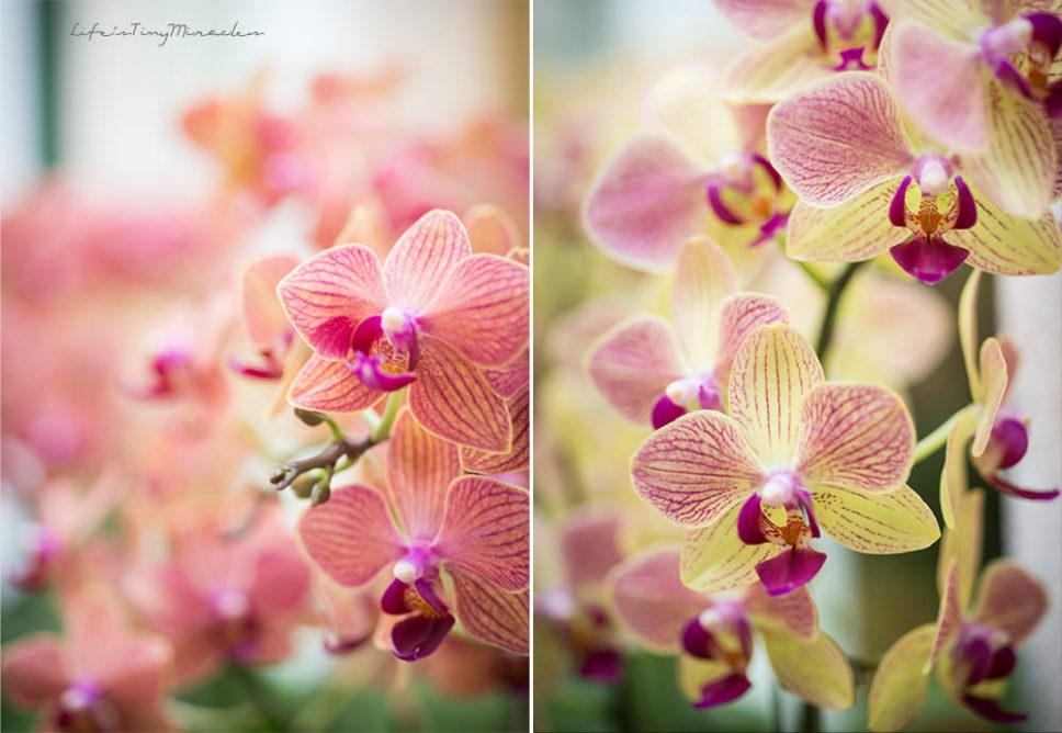 OrchidConservatoryCollage1