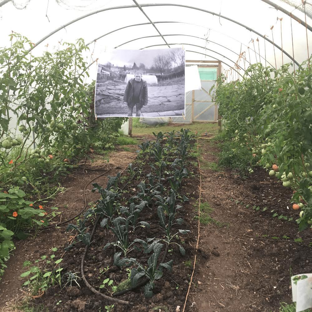 Water Salad on Monday at Elm Tree Farm