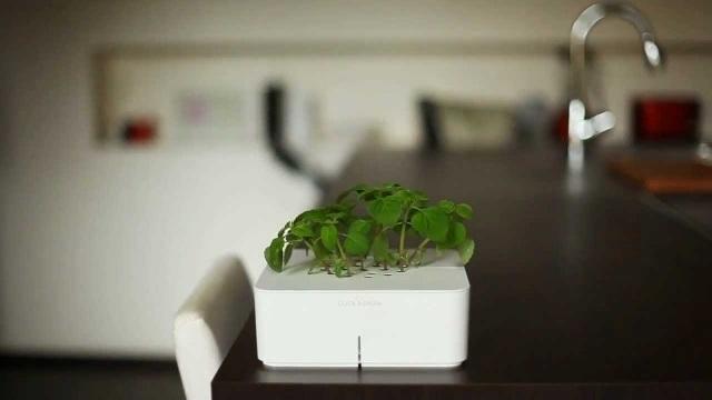Click & Grow Electronic Smartpot Plants_3