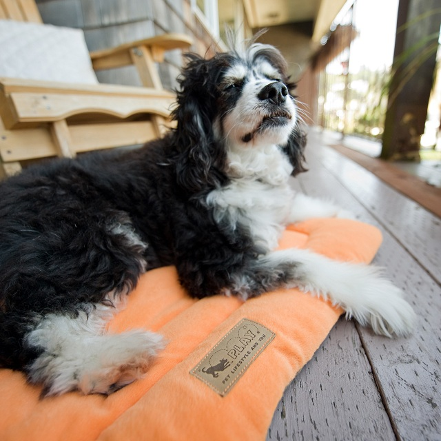 P.L.A.Y. Pet Lifestyle and You Chill Pad Orange