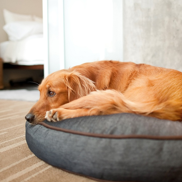 P.L.A.Y. Pet Lifestyle and You Round Bed Denim + Brown