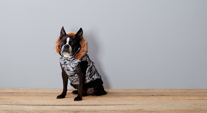 The Fall Dog: Autumnal Canine Styles at Gilt