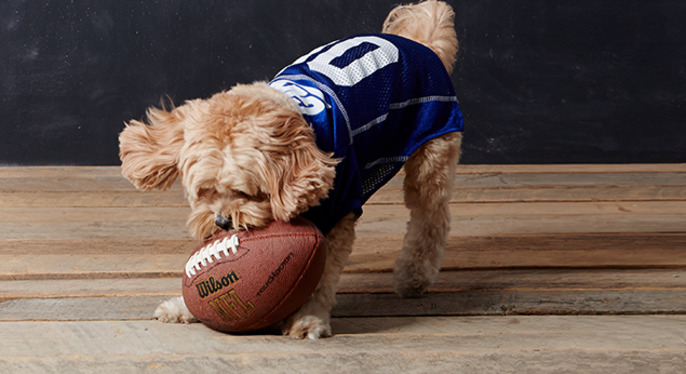Game Day Gear For Your MVP (Most Valuable Puppy) at Gilt
