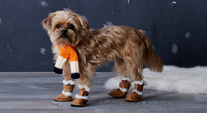 Warm Those Paws: Cold-Weather Pet Accessories at Gilt