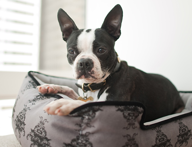 Best In Show: Pet Gear & Animal Accents at MYHABIT