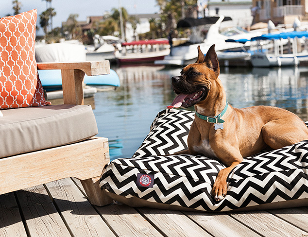 Up to 80 Off Pet Accessories at MYHABIT