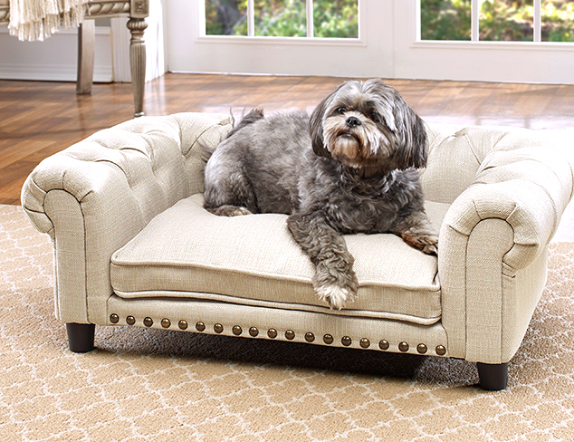 Treat Your Pet feat. Enchanted Home at MYHABIT