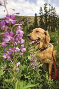 dog on nature hike