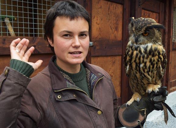 Falcory at Ashford CAstle in Ireland