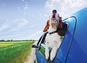 fun road trip with pets