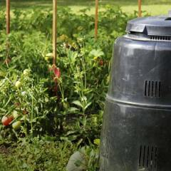 Tips for novice composters